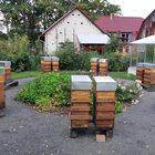 Bienenvolk oder Kunstschwarm mit einjaehriger oder neuer Koenigin