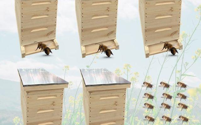 Bienen-Komplettset! 5 x Kunstschwärme mit Reinzuchtkönigin und 5 Komplettbeuten mit Rähmchen