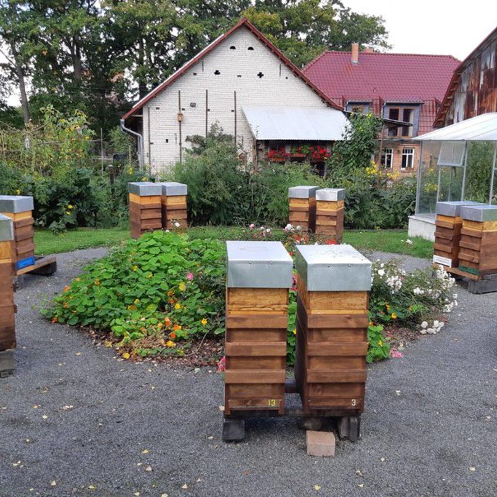 Bienenvolk mit einjeaehriger oder neuer Koenigin auf Langstroth 2/3