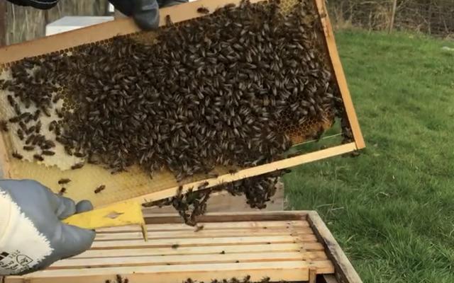 Bienen junge Ableger mit Gesundheitszeugnis