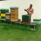 Bienenkönigin F1 Bienen Königin begattet 2021