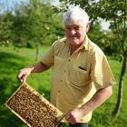 Bienen Buckfast F1 Königin