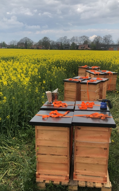 Bienenvolk mit diesjähriger Carnica F1-Königin