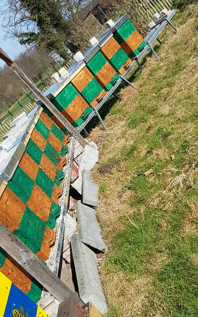 Bienenvolk mit Holzbeute, Carnica F1 Nachzucht