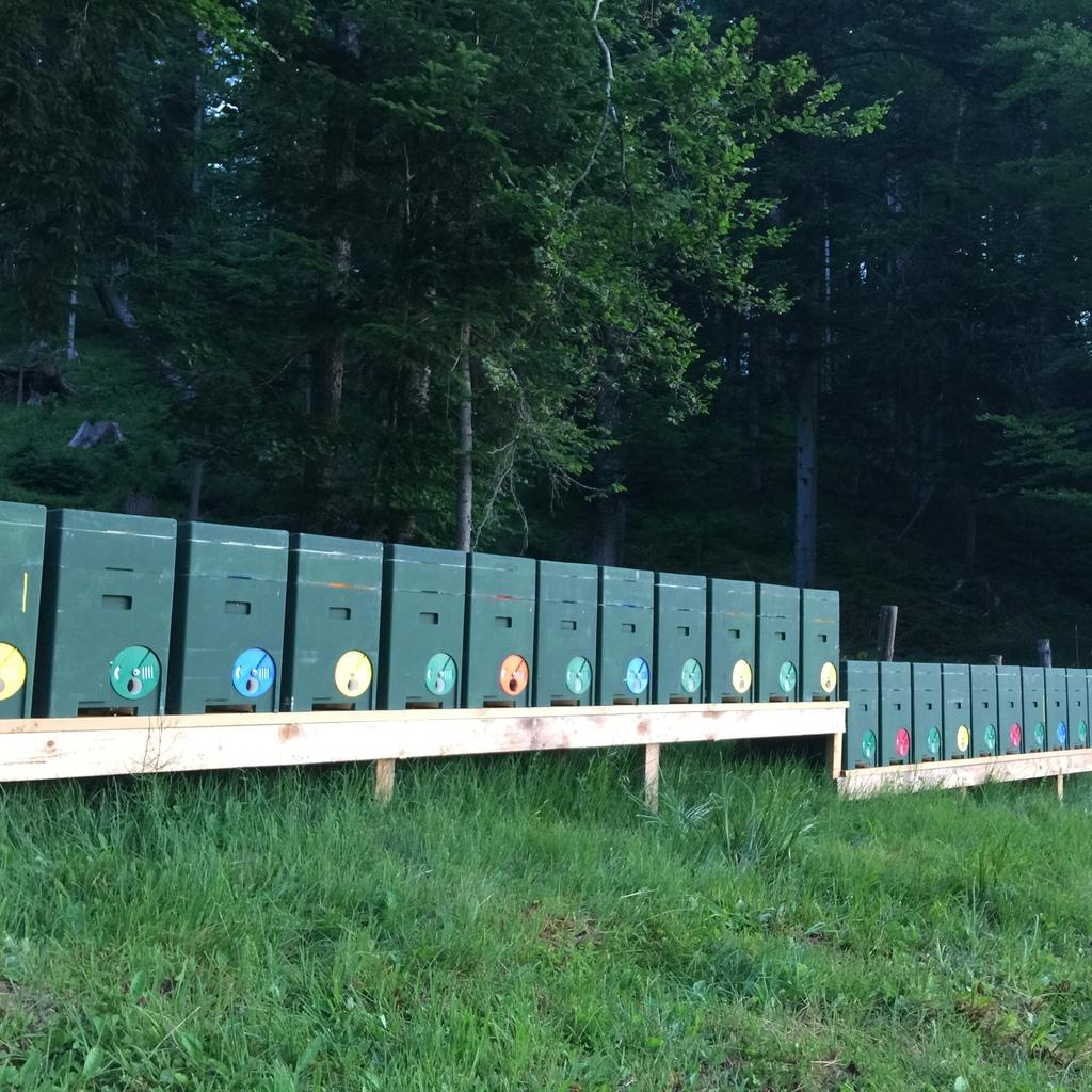 Tiroler Carnica 5 Waben Ableger