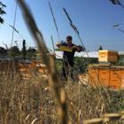 Carnica Bio-Wirtschaftsvölker mit F1 Wirtschaftskönigin aus 2018, 10 Brutwaben