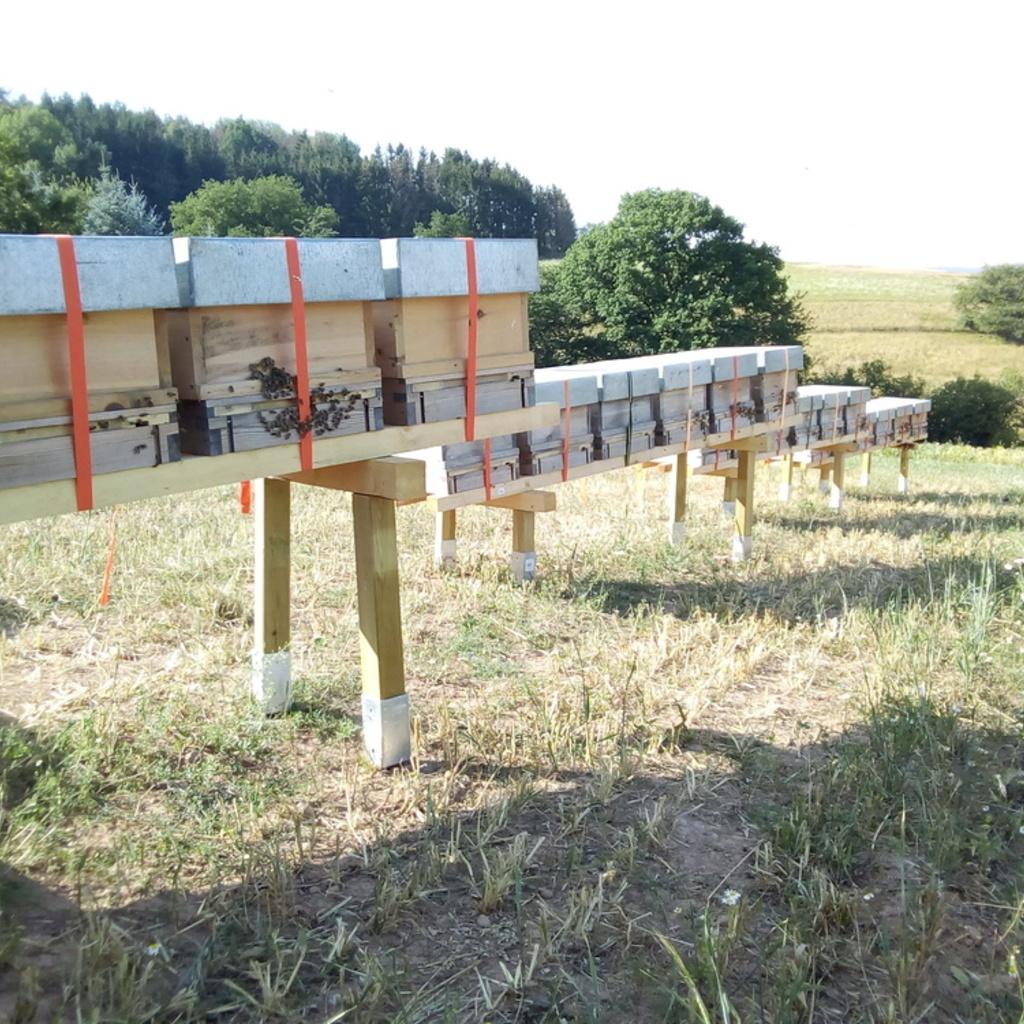 10 Waben Bienenvolk Zander Carnica