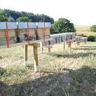 10 Waben Bienenvolk Zander oder Langstroth Carnica