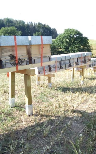 6 Waben Bienenvolk Langstroth Carnica (mit Königin)