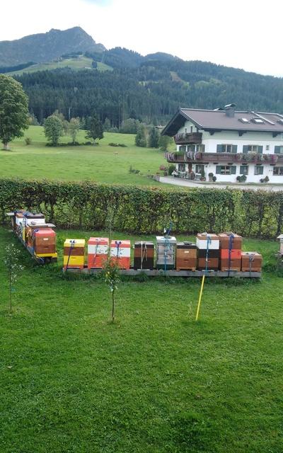 Echte Tiroler Carnica Wirtschaftsvölker
