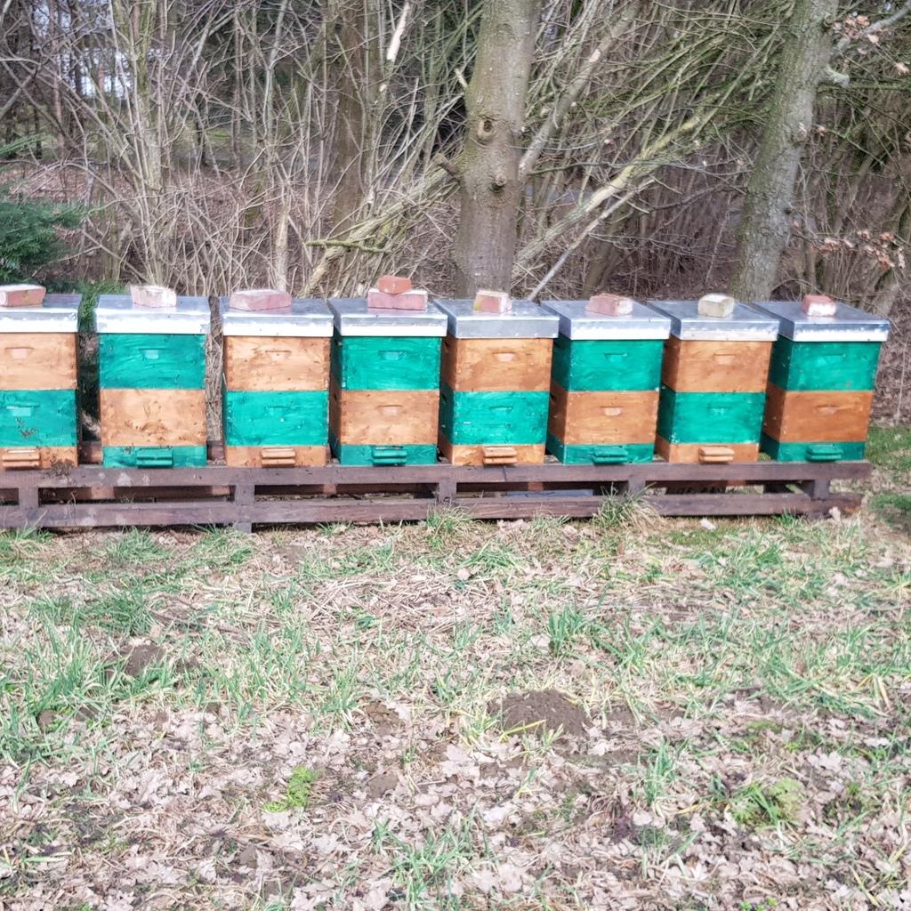 Zanderbeuten Deutsch Normal Beuten ohne Bienen gebraucht 70€