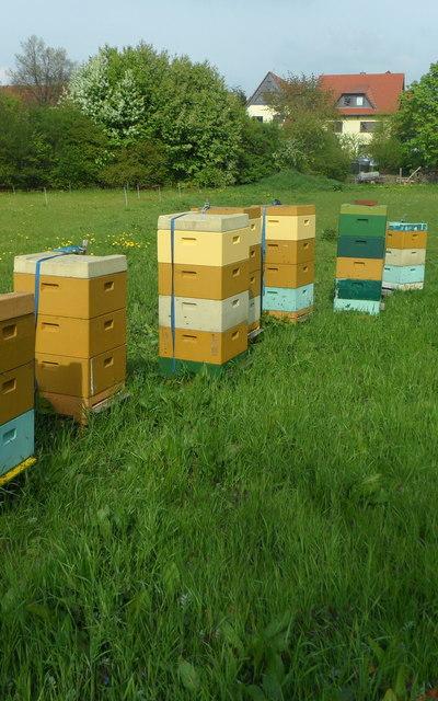 Carnica Bienenvolk 2 Zargen Dt. Normalmaß