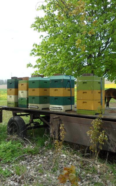 Carnica Bienenvölker 2 Zargen Dt. Normalmaß Segeberger Beuten