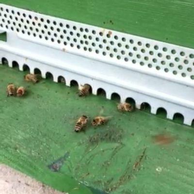 Bienen 1
