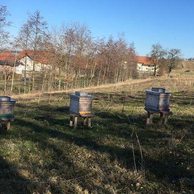 Bienen innernsee