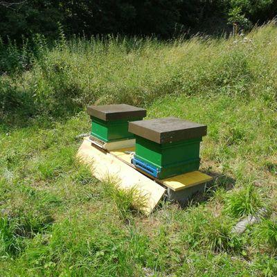 Bienenst%c3%b6cke