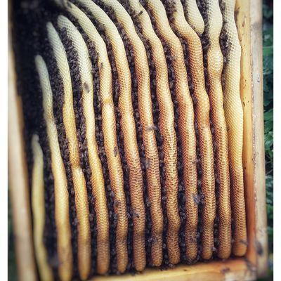 Bienen wabencloseup