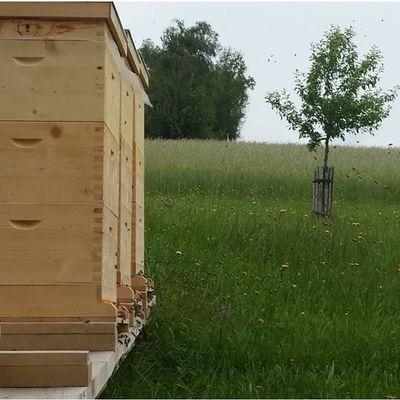 Bienenstand wakolbinger