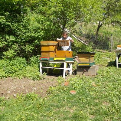 Bienen 11
