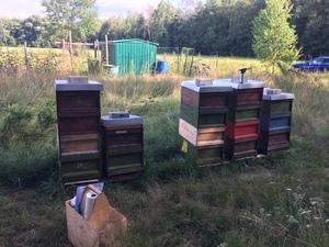 Bienenstand langwasser