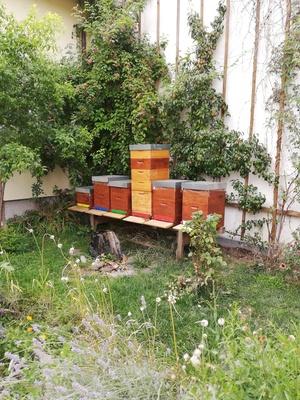 Bienenstand waldstra%c3%9fe