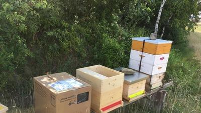 Bienenpaket