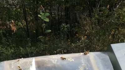 Hektar nektar einf%c3%bcttern