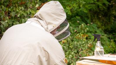 Bieneneinzug