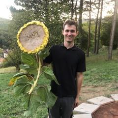 Imker mit riesensonnenblume