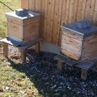 Bienen viertlbach h%c3%bctte