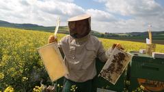 Alexander   imker mit honigwaben