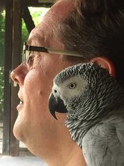 Georg mit papagei 240x288