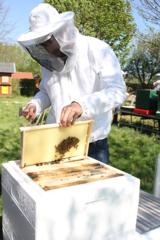 Hilde honig imkerei agentur erschafft hildesheim 20194