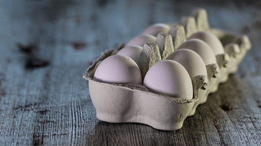 Alles-rund-um-das-Ei