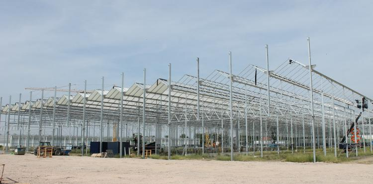 Ter Laak opts for sustainability with LED, HPS and HORTISENSE®