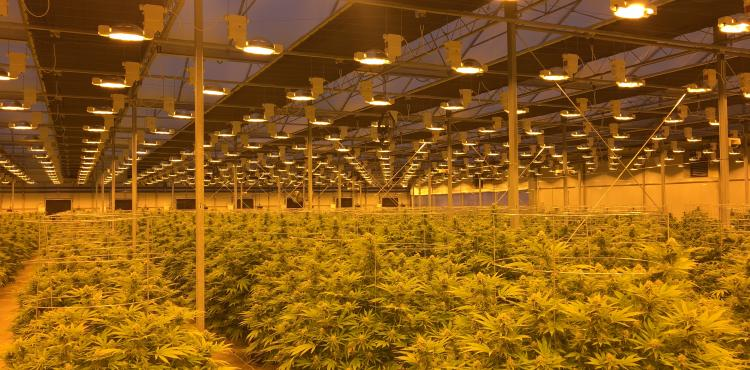 Medicinale Cannabis - Groeilicht Hortilux