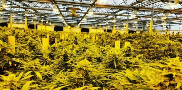 medicinal cannabis industry