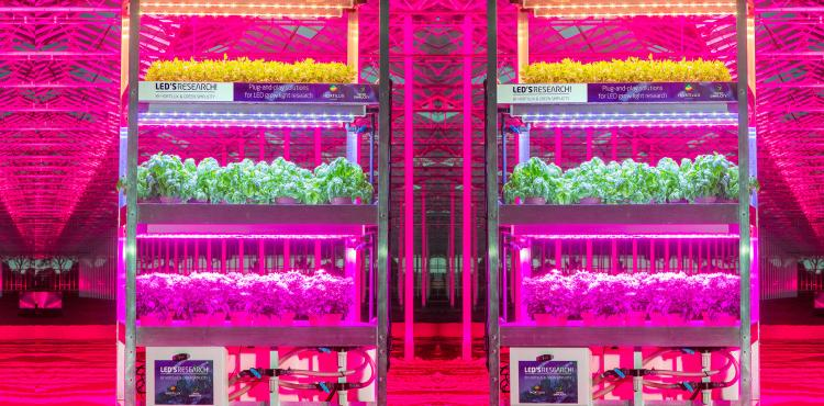 Research LED lighting for soft fruit | Strawberry Demoday