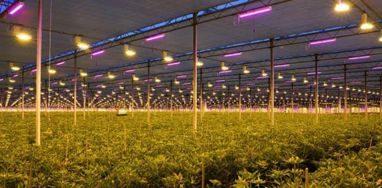 Led belichting Together2Grow