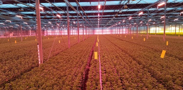 Hybride groeilichtsysteem