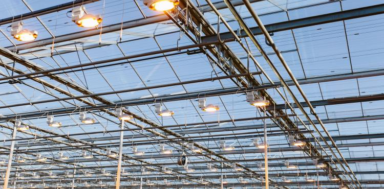 Pure profit: maintain your grow light installation