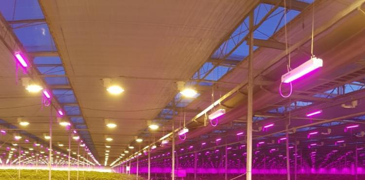 LED is on the rise, when it's combined with HPS