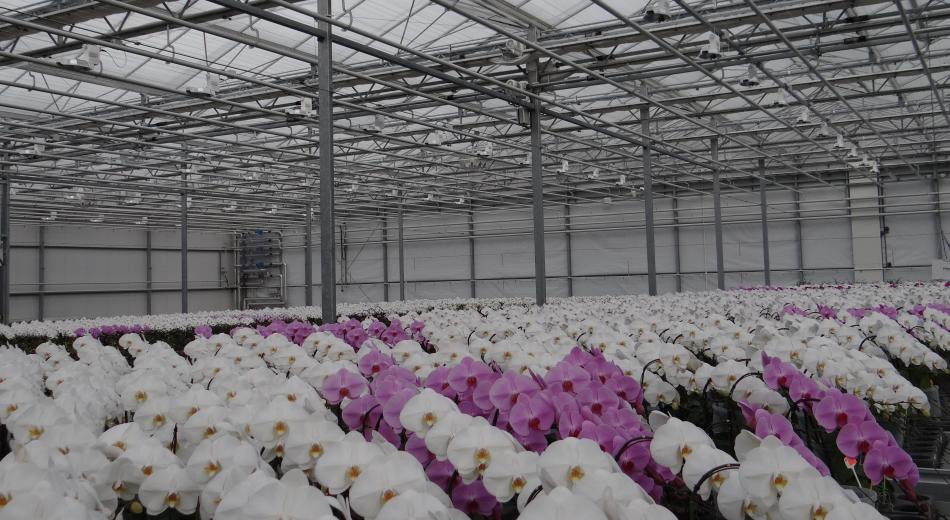 Opti-flor - Hortilux