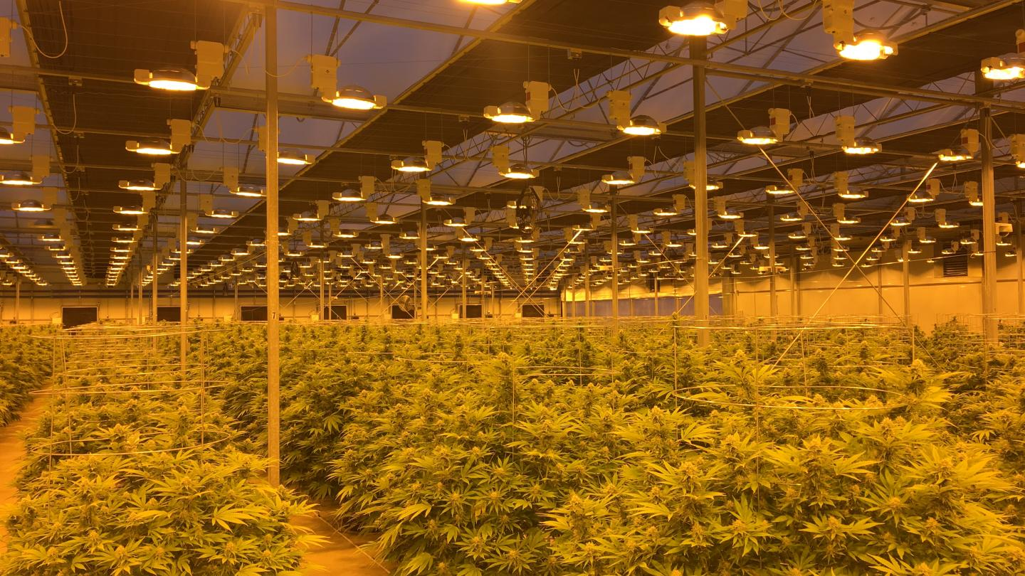 Medicinal Cannabis - Grow light Hortilux