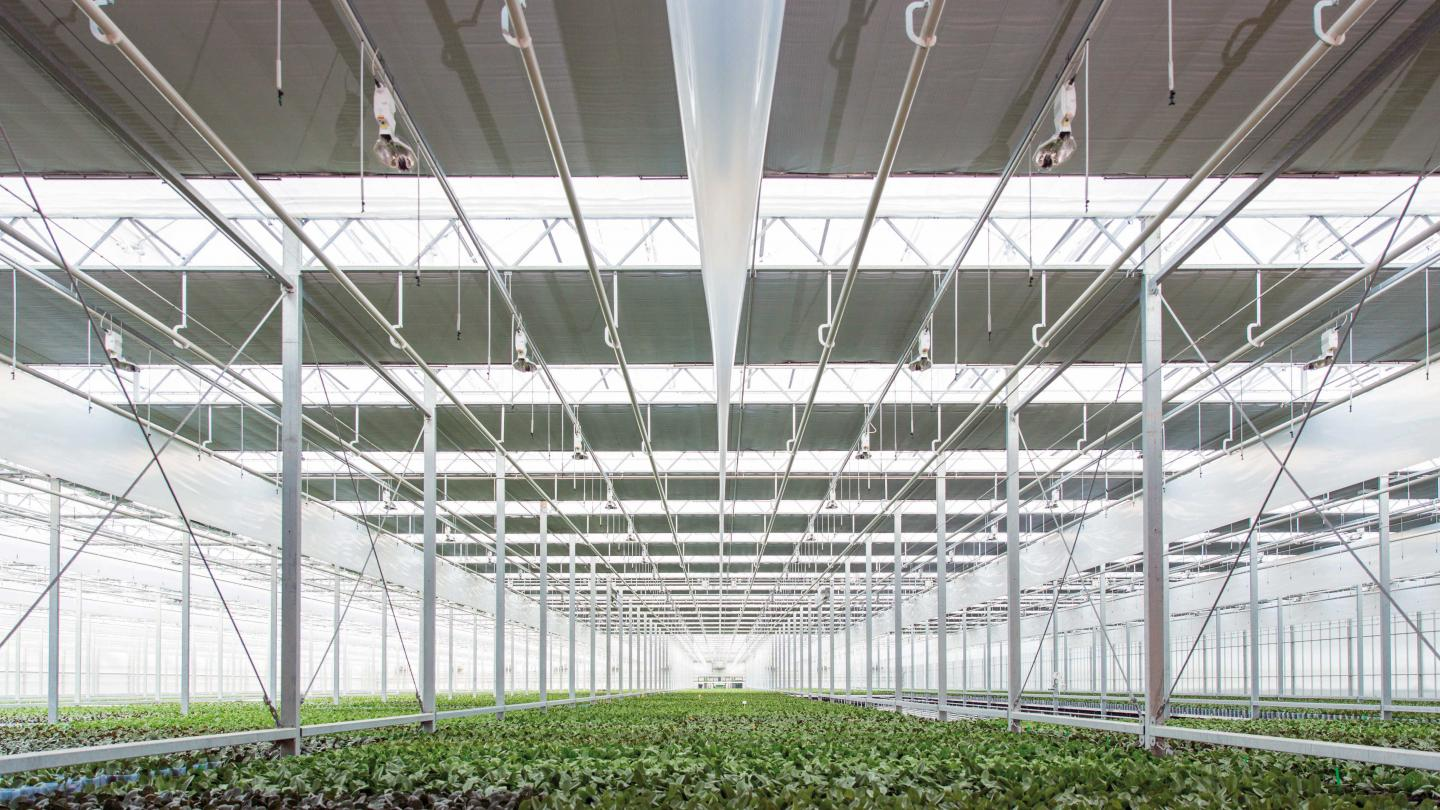 Think the other way around: choose your grow light before your greenhouse