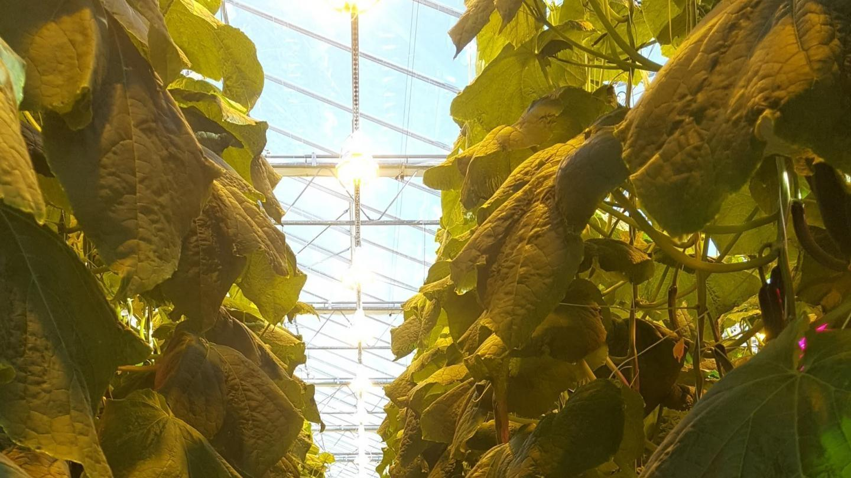 Controlling light extinction means controlling production