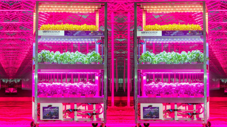 Onderzoek LED belichting voor zachtfruit | Aardbeien Demodag