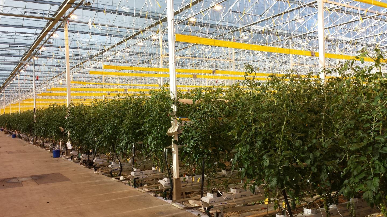 Inzicht in dagelijkse plantprestatie biedt kansen voor productieverhoging