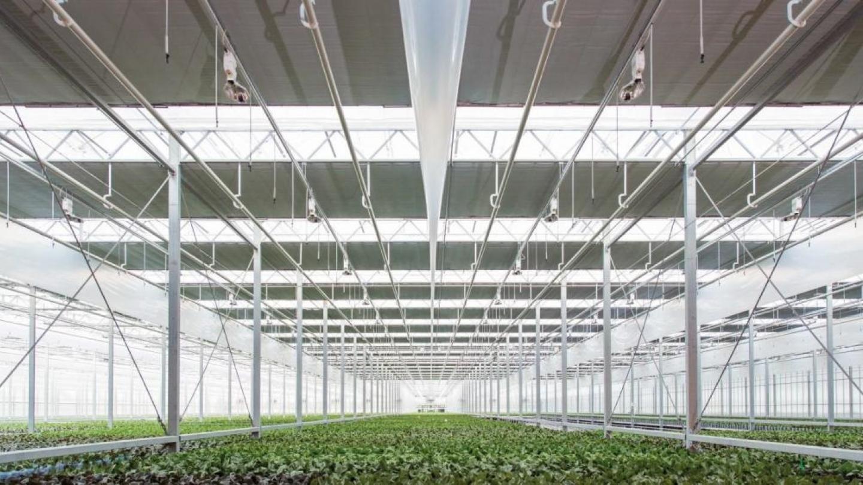 Goed en tijdig onderhoud groeilichtinstallatie levert pure winst op
