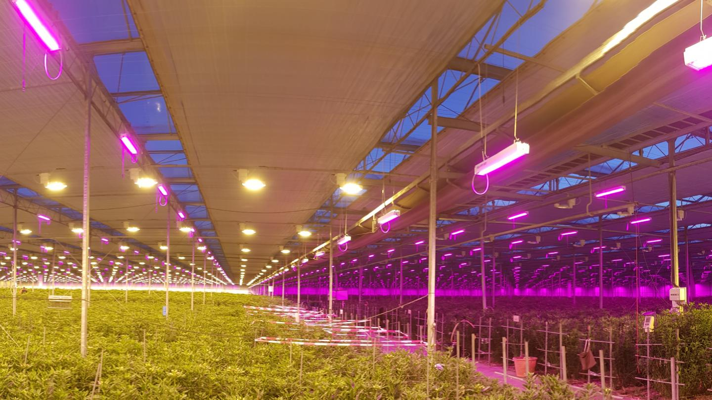 VIDEO: 'Achieve the best results by understanding grow light technology'
